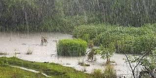 Нийслэлд оройдоо бага зэргийн бороо орно