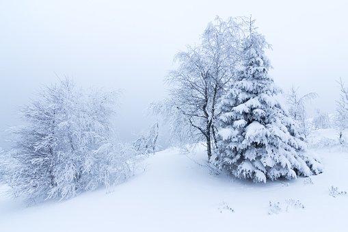 Их хэмжээний цас орж, хүйтэрнэ