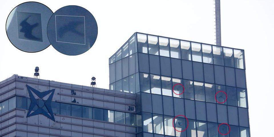 Нийслэлийн өндөр шилэн барилгуудад махчин шувууны хэлбэртэй наалтууд байрлуулжээ