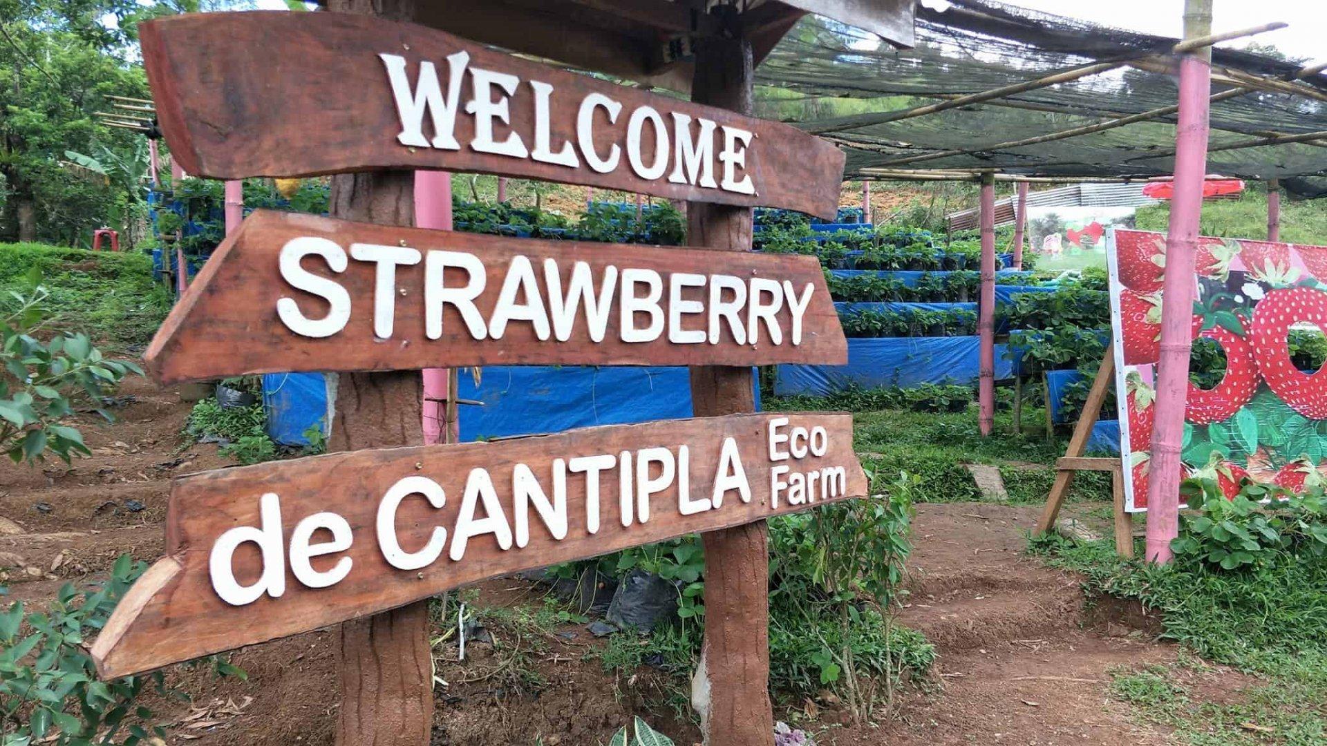 ХАРДАА: Себу хотод байдаг гүзээлзгэний ферм