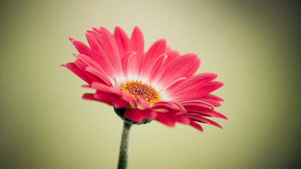 Эрүүл мэндэд хамгийн хэрэгтэй 10 цэцэг