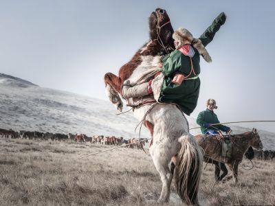 Mongolian bucking horse