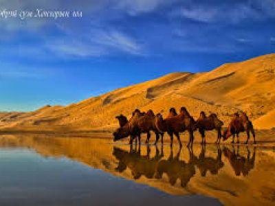 고비 사막