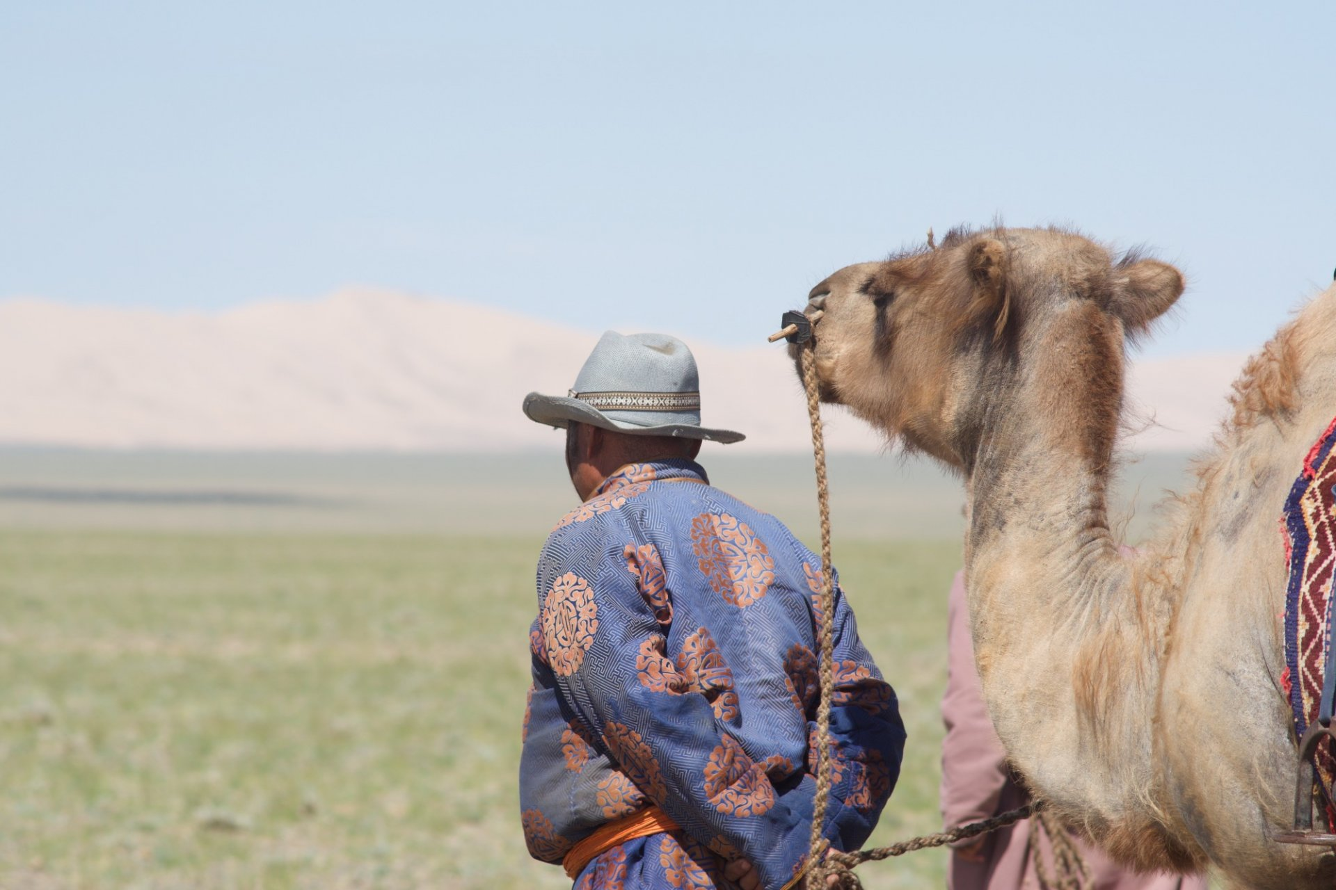 THE CAMELS AND THE HERDERS