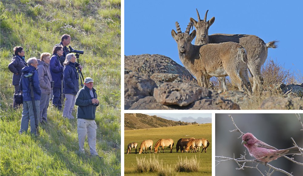 Introduction to the wildlife of Mongolia