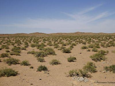 Shrubby Desert