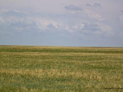 Eastern Steppe