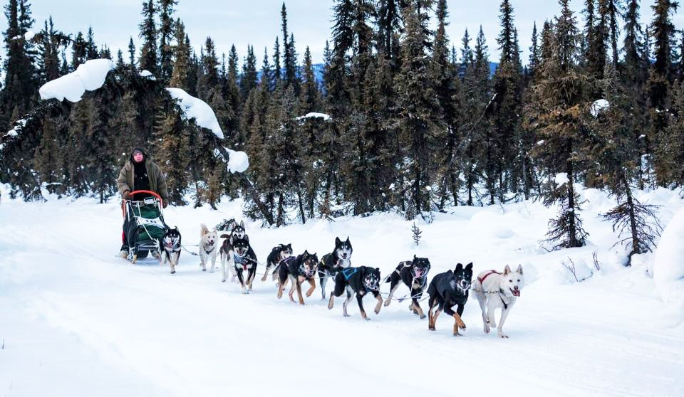 Terelj National Park Dog sledding