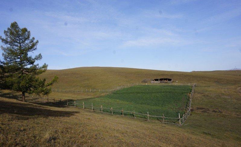 Архангай аймгийн Чулуут  сумын Баян-хайрхан БАХ-т ногоон конвейр байгуулав