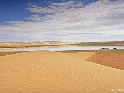 Монгол элс