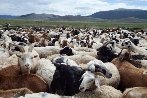 Standards aimed at increasing the competitiveness of Mongolian livestock products in the world market have been approved.