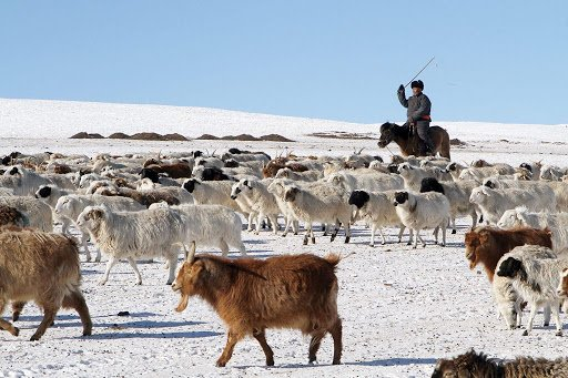 How is the wintering condition in Mongolia?