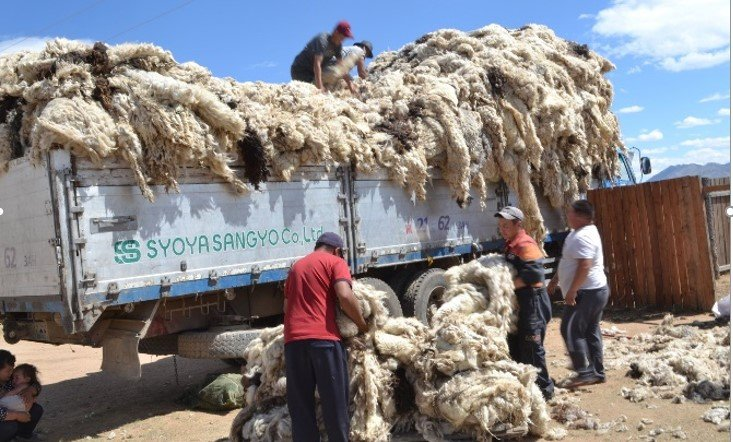 Cooperatives made sales of 5.4 billion MNT of raw materials in 2020