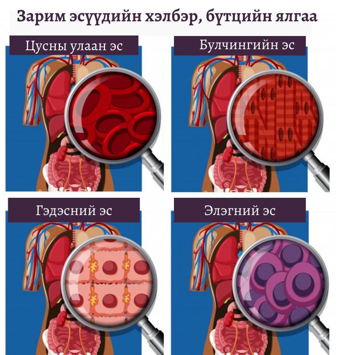 Эс гэж юу вэ? Вирүс болон бактер хоорондоо ямар ялгаатай вэ?